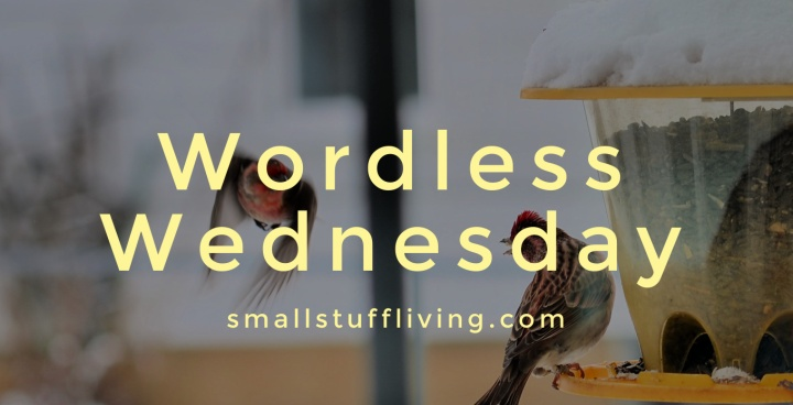 Wordless Wednesday – Bird Wars