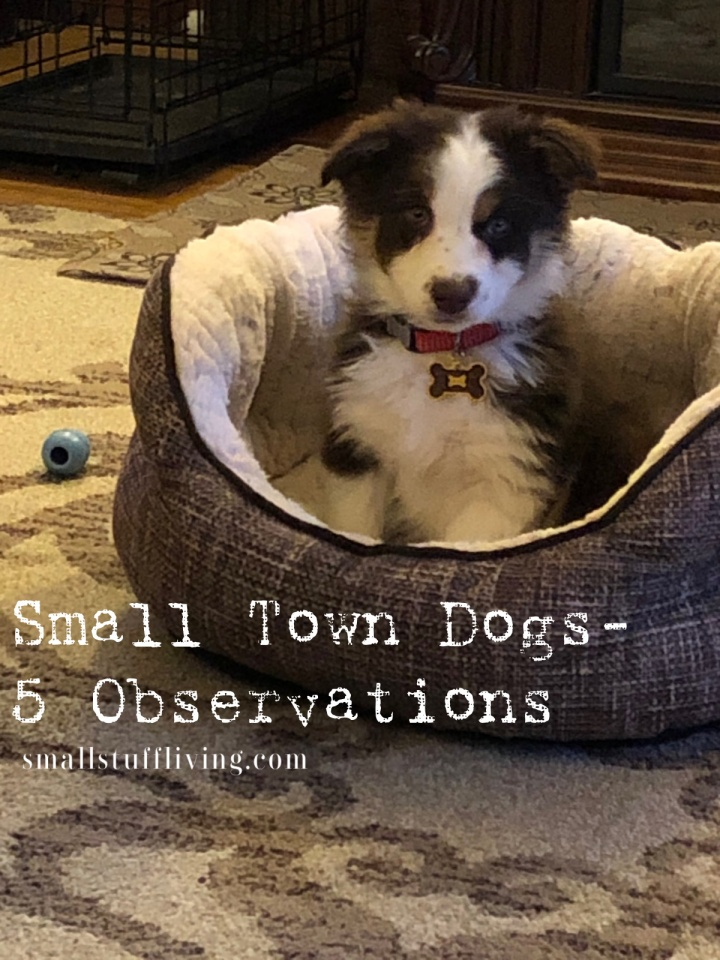 Small Town Dog Owners – 5 Observations